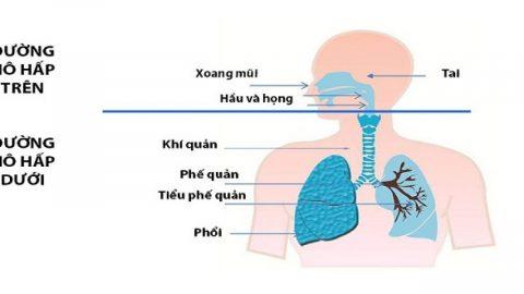 Viêm đường hô hấp trên khi mang thai