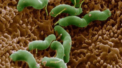 Nguy cơ ung thư từ vi khuẩn HP