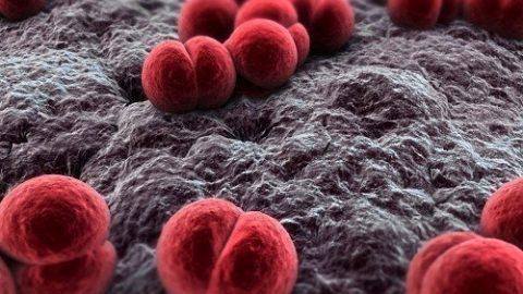 Những điều cần biết về bệnh viêm màng não mô cầu