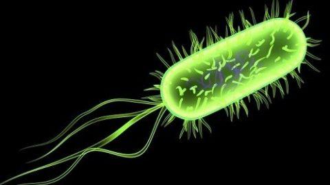 Tìm hiểu về nhiễm khuẩn tiết niệu