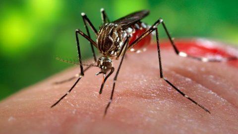 83 người Sài Gòn nhiễm virus Zika