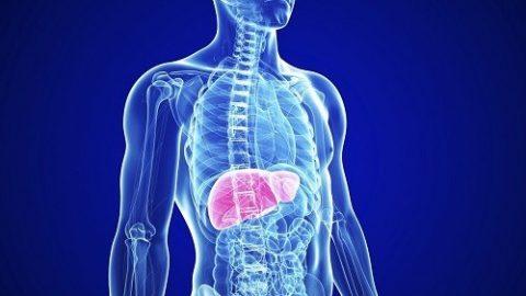 Một số điều bạn cần biết về lá gan