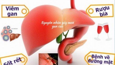 Men gan cao và những điều cần biết