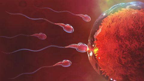 Tổng hợp những dấu hiệu thai đã vào tử cung, bạn cần lưu ý