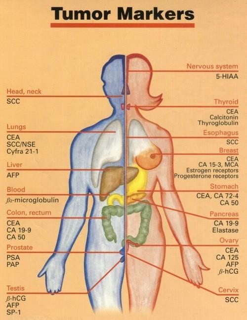 Các dấu ấn ung thư có thể giúp chẩn đoán, theo dõi điều trị và đánh giá khả năng tái phát sau điều trị của các bệnh ung thư