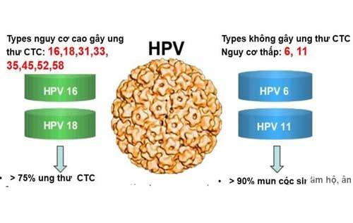 Xét nghiệm HPV là gì? HPV là những virus nhỏ và thường lây truyền qua đường tình dục.