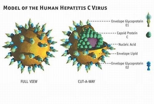 Xét nghiệm HCV RNA là gì ?