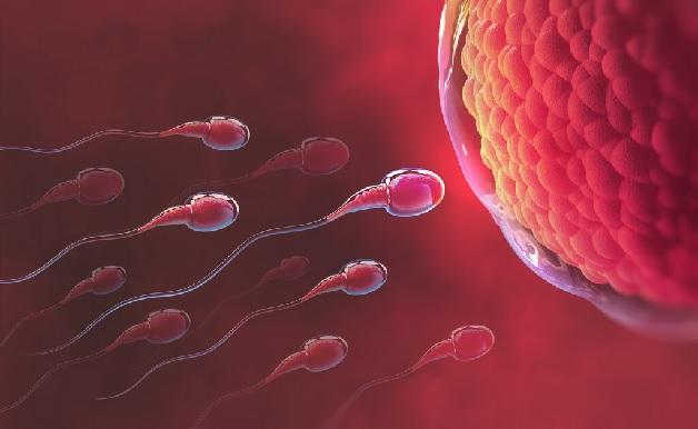 Dấu hiệu rụng trứng kéo dài bao lâu là điều nhiều chị em muốn biết