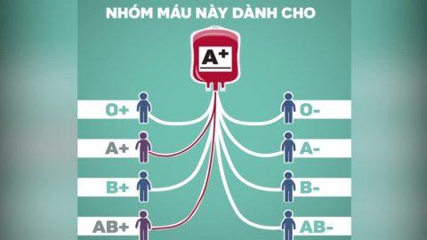 Nhóm máu ab nhận được nhóm máu nào?