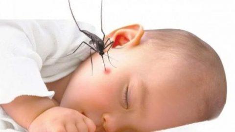 Bệnh sốt xuất huyết ở trẻ em rất nguy hiểm