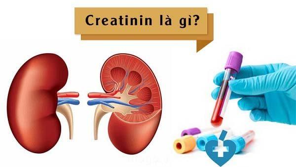 định lượng creatinine máu phản ánh điều gì?