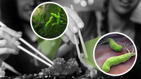 Vi khuẩn HP có lây không? Khi nào thì biết nhiễm vi khuẩn HP