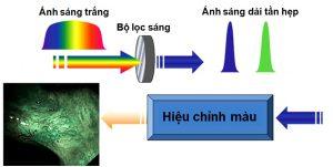 Kỹ thuật nội soi với dải tần ánh sáng hẹp (NBI)