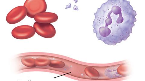 Số lượng tiểu cầu trong cơ thể nói lên điều gì?
