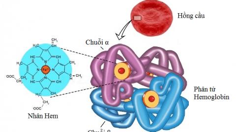Điện di huyết sắc tố một xét nghiệm quan trọng chẩn đoán