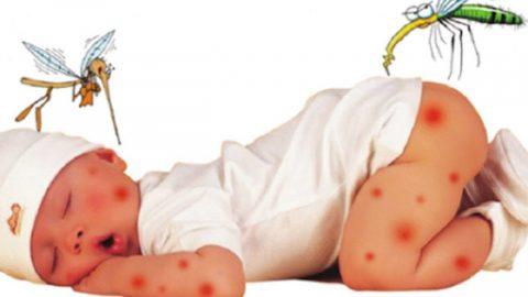 Trẻ bị muỗi cắn, bố mẹ cần lưu ý những điều gì?