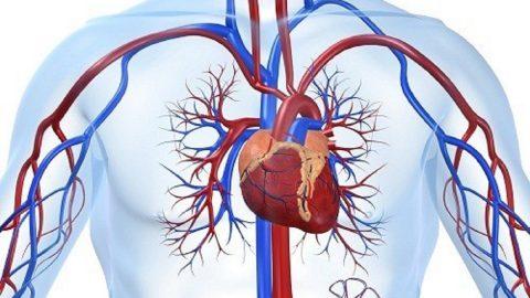 Hiểu ngọn ngành về căn bệnh hẹp van tim