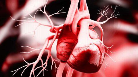 Động mạch vành tim là gì? 3 loại bệnh thường gặp ở động mạch vành