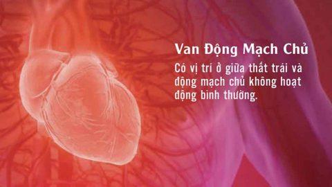Bệnh van động mạch chủ là gì? Nguyên nhân và dấu hiệu