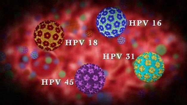 Có khoảng 100 chủng virus HPV khác nhau và 40% là loại có khả năng gây bệnh cho con người.