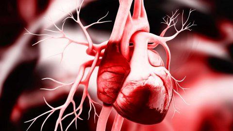 Dị dạng mạch vành là gì? Triệu chứng và cách điều trị