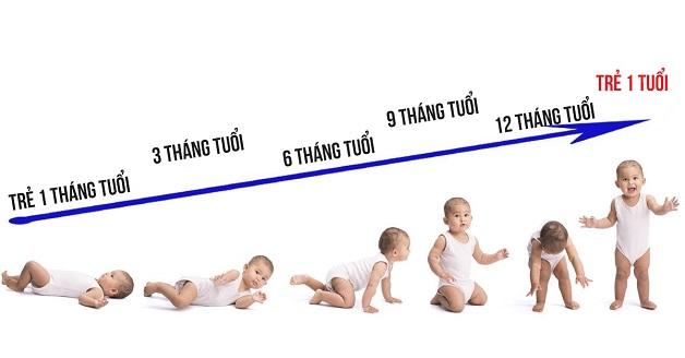 Trong giai đoạn trước 12 tháng tuổi, tốc độ phát triển cơ thể của bé khá nhanh do đó nhu cầu lương thực cần nạp vào cơ thể cũng tăng.