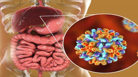 Viêm gan b mãn tính là gì và có nguy hiểm hay không?