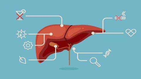 Bạn có biết cách hạ men gan cao hiệu quả