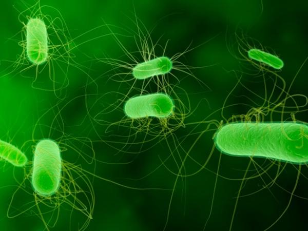 Vi khuẩn E.Coli cũng là một trong những nguyên nhân dẫn đến bệnh lý rò ở hậu môn