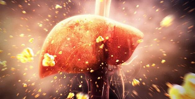 Men gan tăng làm suy giảm chức năng thải độc gan