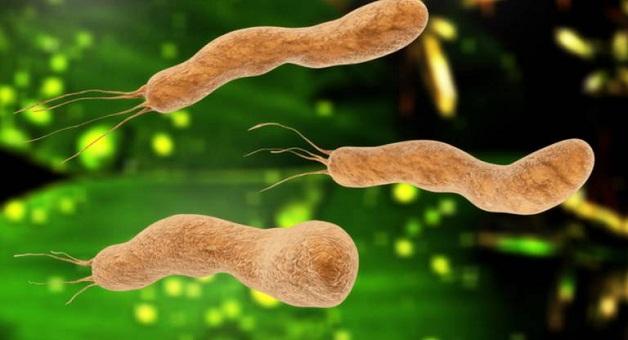 Vi khuẩn Hp gây ra bệnh gì?