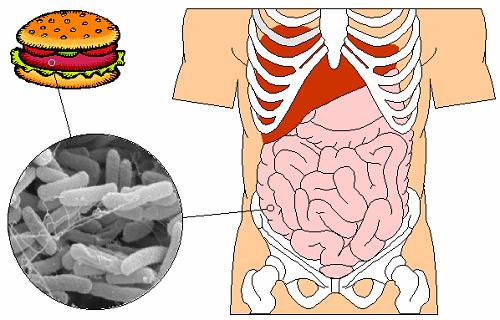 Bệnh lỵ amip được lây qua đường tiêu hóa do thức ăn, nước uống bị nhiễm kén amip
