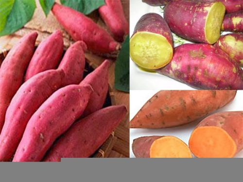 Một số thực phẩm có tính nhuận tràng tốt như rau lang, khoai lang, rau mồng tơi, rau đay, rau diếp cá