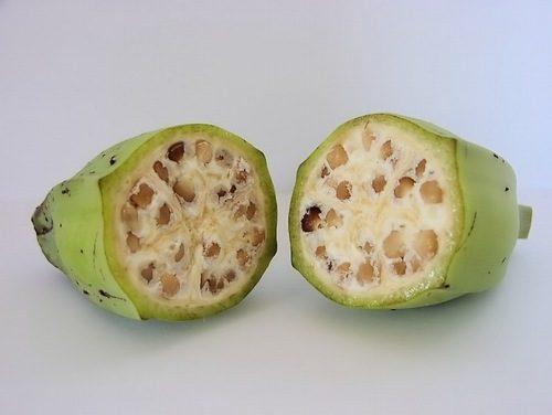 Nhiều người cũng sử dụng chuối hột để chữa đau dạ dày tại nhà