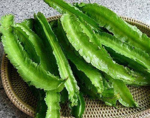 Đậu rồng là một loại thực phẩm chứa nhiều dưỡng chất tốt cho cơ thể