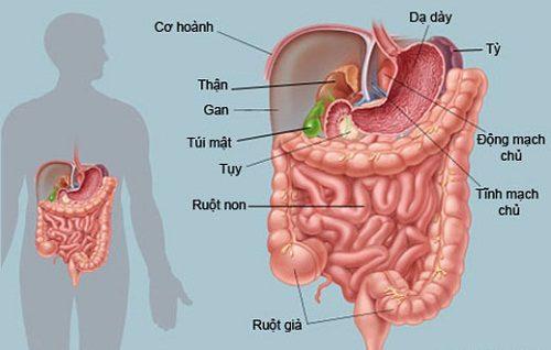 Đau trên rốn - có thể bạn mắc bệnh dạ dày