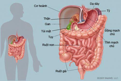 Tìm hiểu sinh lý bệnh tiêu hóa giúp mọi người biết các bệnh đường tiêu hóa, các dấu hiệu, nguyên nhân của bệnh.