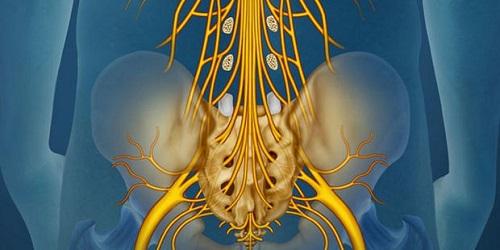 Hội chứng chùm đuôi ngựa nếu không điều trị kịp thời có thể gây tàn phế vĩnh viễn