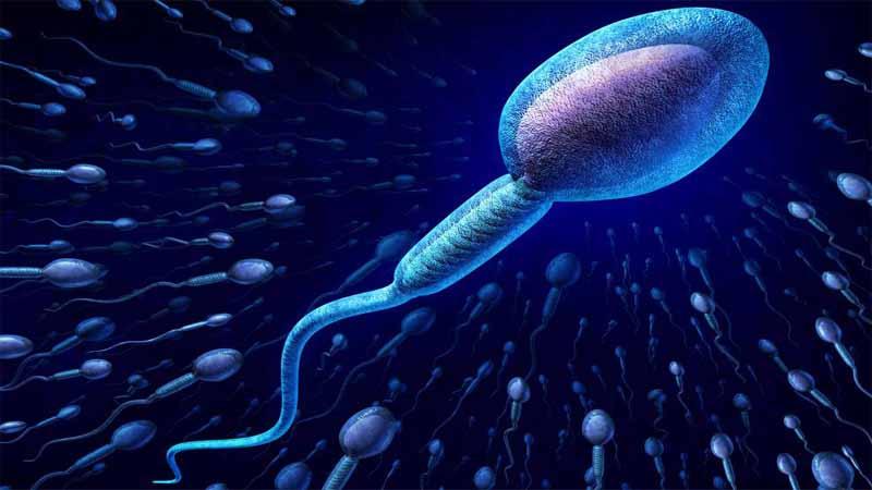 Trong cơ thể nam giới có thể có chứa kháng thể cản trở tinh trùng gặp trứng để thụ tinh.