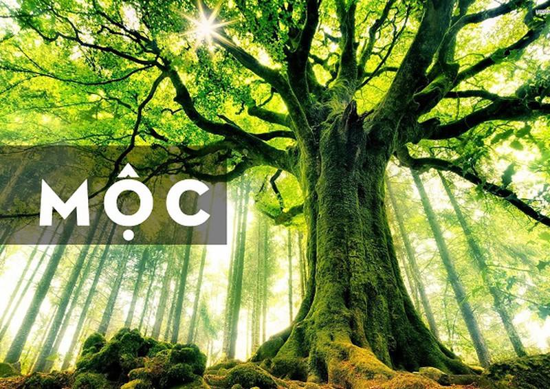Mộc chính là tên gọi tượng trưng cho mọi loài cây, cỏ sống trên mặt đất