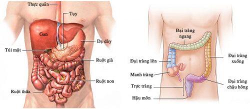 Trực tràng là đoạn ruột thẳng nằm ở vị trí cuối đại tràng