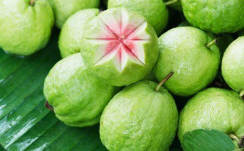 Ổi giàu vitamin C giúp tăng cường sức đề kháng cho người bệnh sốt xuất huyết.