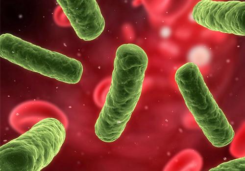 Vi khuẩn HP xâm nhập vào dạ dày của con người qua đường ăn uống.