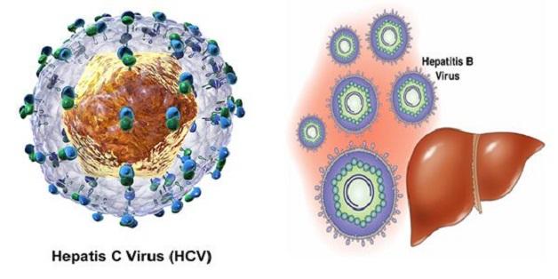 Bệnh viêm gan C do virus HCV gây ra