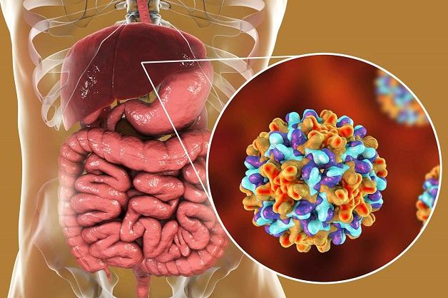phân loại viêm gan B và triệu chứng viêm gan siêu vi B