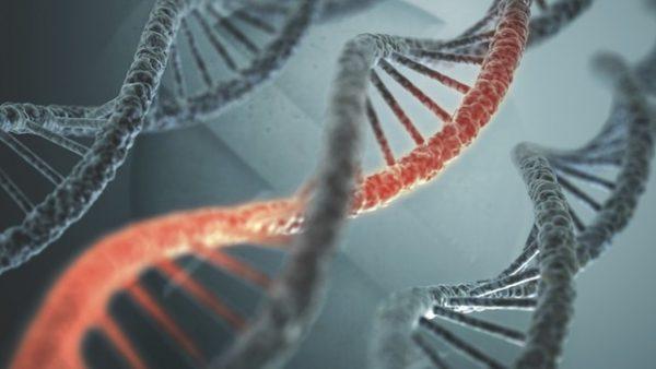 Nhiều đột biến gen tăng nguy cơ phát triển ung thư trong suốt cuộc đời lên tới 80%