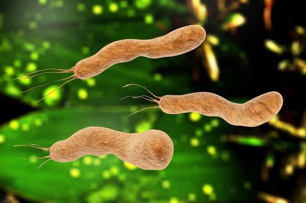 Vi khuẩn Hp từ đâu mà có?