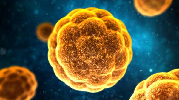 Triệu chứng của bệnh viêm gan A