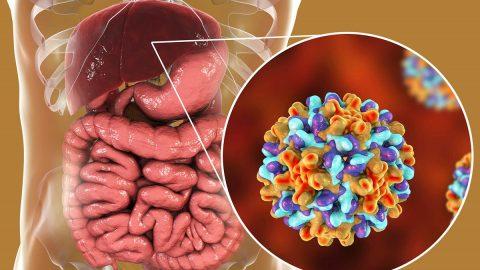 Dấu hiệu nhận biết và cách phòng viêm gan siêu vi b là gì?