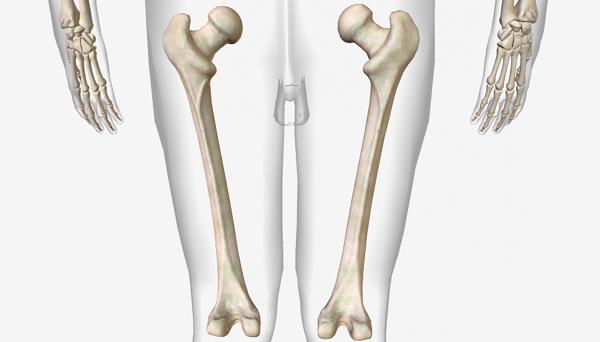 Xương đùi là xương to nằm giữa háng và gối